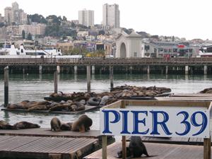 Pier39のアザラシ@サンフランシスコ