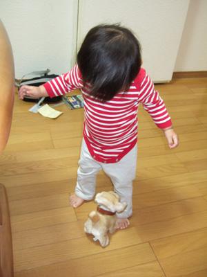 ワンワンと吠えながら歩く犬