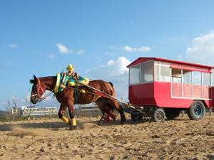 鳥取砂丘の遊覧馬車