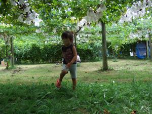ブドウ園で走る長女2歳@太田酒造びわこわいんワイナリー