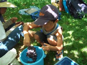 巨大な葡萄を食べる長男5歳@太田酒造びわこわいんワイナリー
