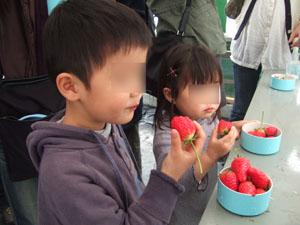 いちごを食べる子供達@華やぎ観光農園のイチゴ狩り
