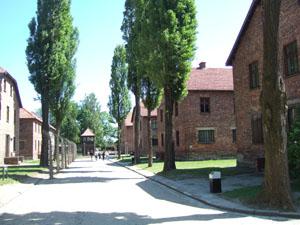 囚人棟とポプラの木@アウシュビッツ強制収容所