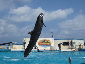 イルカたちの「オキちゃんショー」@沖縄美ら海水族館