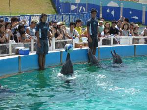 イルカたちの「イルカラグーンショー」@沖縄美ら海水族館