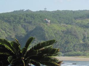 辺戸岬から見えるヤンバルクイナ展望台@国頭, 沖縄