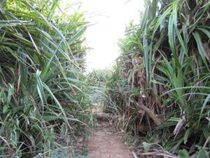 灯台から先へと続く小道@喜屋武岬, 沖縄