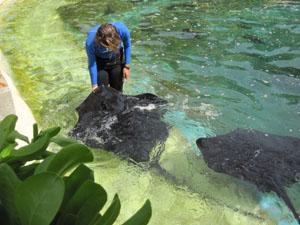 飼育係がエイに餌の魚を与える@ハワイ家族旅行