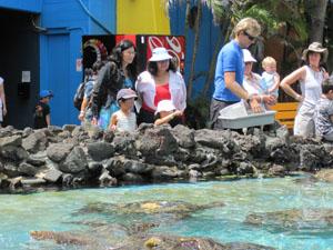 ウミガメの餌付け@ハワイ家族旅行