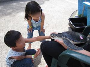 ウミガメの赤ちゃんにタッチ@ハワイ家族旅行