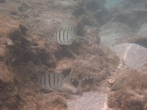岩場を泳ぐ魚たち@ハワイ家族旅行