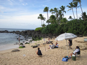 監視員に見守れて甲羅干しするウミガメ@ハワイ家族旅行