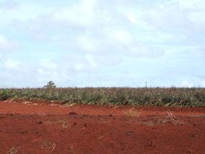 広大なパイナップル畑@ハワイ家族旅行