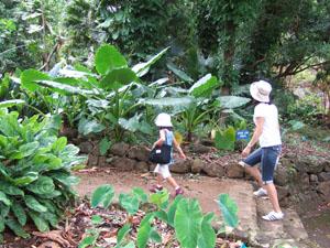 ワイメア渓谷のハイキングに出発@ハワイ家族旅行