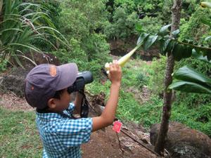 双眼鏡で花を覗き込む長男6歳@ハワイ家族旅行