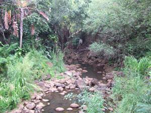 乾季末期のため水量が少ない川@ハワイ家族旅行