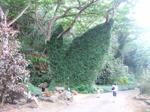 草が生い茂る木@ハワイ家族旅行