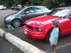駐車場や建物には孔雀がたくさんいる@ハワイ家族旅行