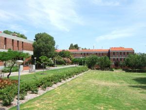 まるで公園のようなCurtin University of Technologyのキャンパス