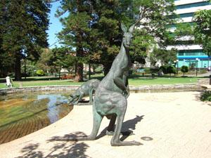 公園のカンガルー@パース,オーストラリア