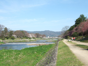 これぞ京都の風景@賀茂川