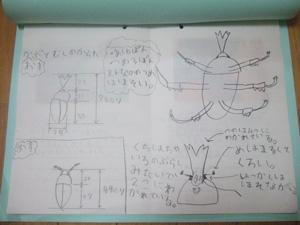 長男の自由研究「かぶとむしのけんきゅう」成虫の観察