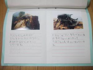 長男の自由研究「かぶとむしのけんきゅう」写真と記録