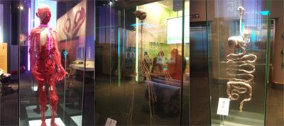 血管・神経・内臓@シカゴ科学産業博物館