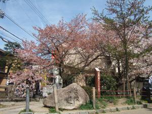 哲学の道@京都