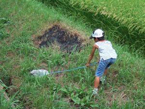 虫取りをする長男8歳@竜王川守観光ぶどう園