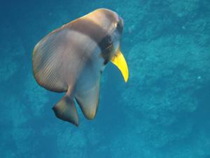 最初に近寄ってきた魚@沖縄研究室旅行