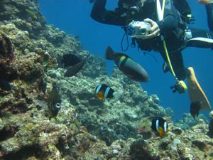 魚たち@沖縄研究室旅行