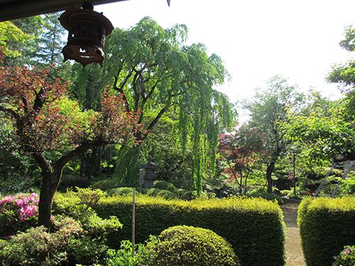 轉合の庭と家光公お手植桜@喜多院