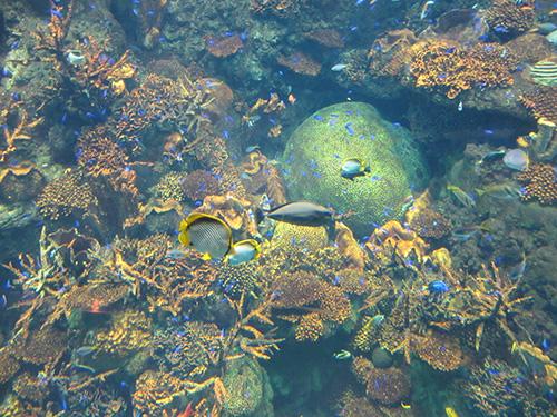熱帯魚と珊瑚@海遊館