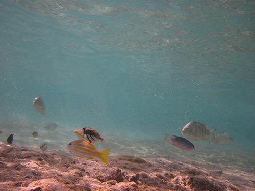 様々な魚が泳いでいる