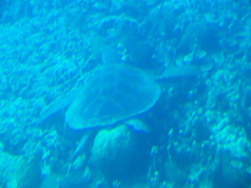 潜水艦アトランティス号でウミガメを発見