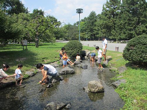 京都御苑(御所)の出水の小川で採水