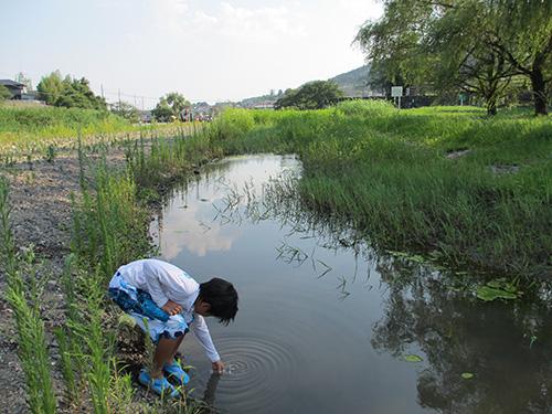 柊野堰堤(ダム)の上側の水溜まりで採水