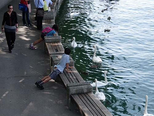 """""""白鳥の湖@チューリッヒ"""""""