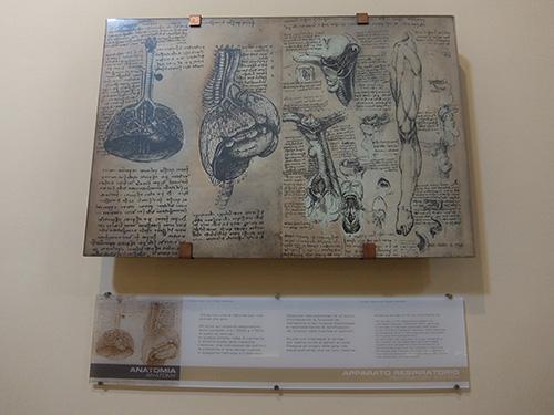 """""""解剖図@レオナルドダヴィンチ科学技術博物館"""""""