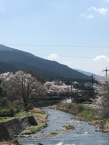 """""""大原の風景(1).三千院の近く.川沿いの綺麗な桜.大原の至る所にこのような景色がある."""""""