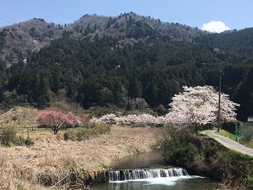 大原の風景(2).春の京都は観光客で大混雑だが,ここには誰もいない.素晴らしい春の日を満喫.
