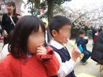 幼稚園の桜祭り