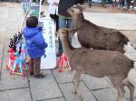 鹿せんべい@奈良公園
