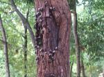 カブトムシとクワガタムシ(11) カブトムシのオス2匹とメス2匹を採取して追加